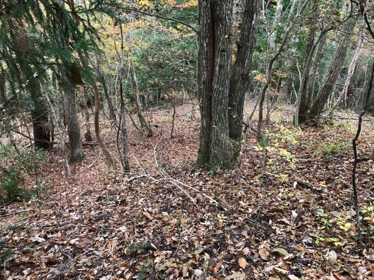 久万高原町のキノコ狩り雑木林