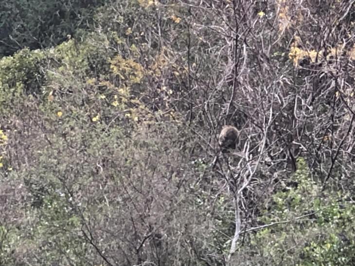 柳谷小学校の近くの山の野生ニホンザル