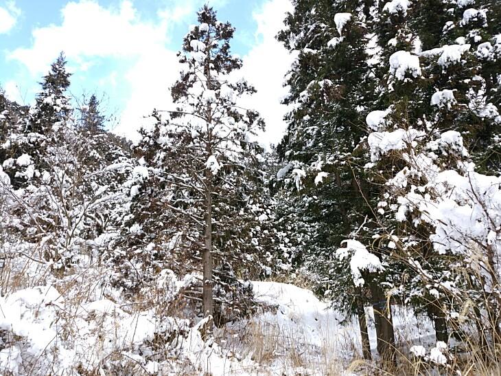 久万高原町に雪がつもった時の登校