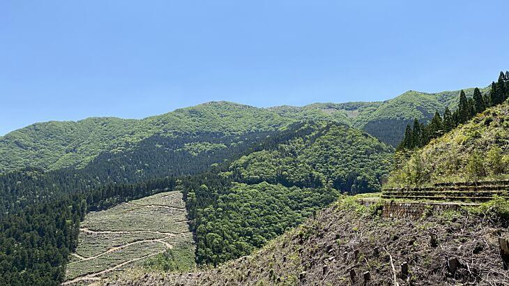 大川嶺の初夏