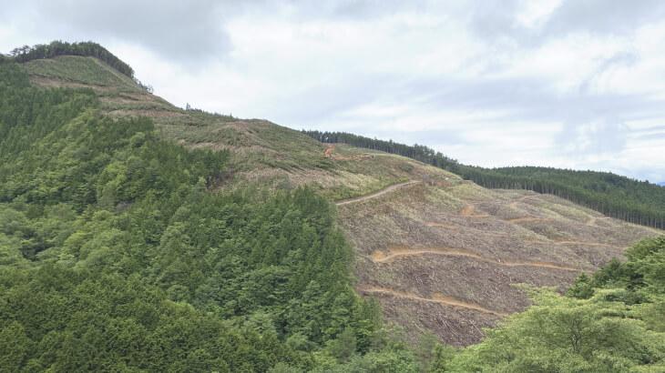 久万高原町の林業 伐採された山林